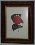 Floral & Plant 7 Gravoures Collection