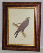 Ζώα & Πουλιά 5