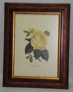 Floral & Plant 1 Gravoures Collection