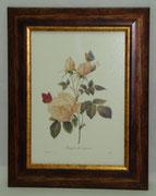 Floral & Plant 15 Gravoures Collection