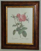 Floral & Plant 11 Gravoures Collection