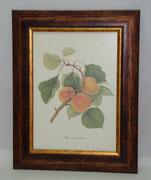 Φρούτα 3