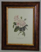 Floral & Plant 6 Gravoures Collection
