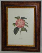 Floral & Plant 5 Gravoures Collection