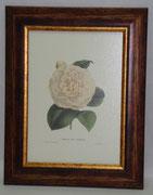 Floral & Plant 3 Gravoures Collection