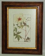 Floral & Plant 22 Gravoures Collection