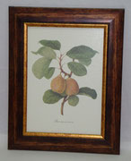 Φρούτα 2
