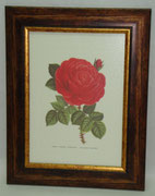 Floral & Plant 8 Gravoures Collection