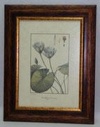 Floral & Plant 20 Gravoures Collection