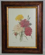 Floral & Plant 16 Gravoures Collection