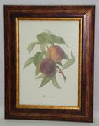 Φρούτα 8