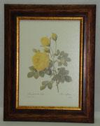 Floral & Plant 14 Gravoures Collection