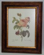 Floral & Plant 13 Gravoures Collection