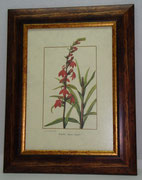 Floral & Plant 19 Gravoures Collection