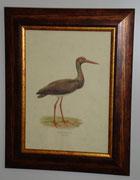 Ζώα & Πουλιά 7