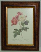 Floral & Plant 10 Gravoures Collection