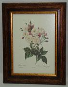 Floral & Plant 9 Gravoures Collection