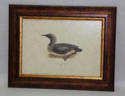 Ζώα & Πουλιά 10