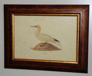 Ζώα & Πουλιά 13