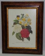 Floral & Plant 17 Gravoures Collection