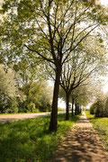 Frühling entlang der Straße