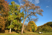 Fürstenlager im Herbst