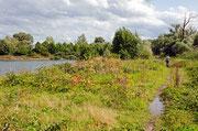 Natur pur/Altrheinsee