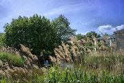 Teich und Altenheim im Biebelpark