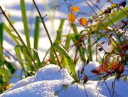 Farbenspiel im Schnee
