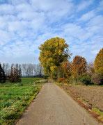 Herbst in den Feldern