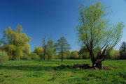 Baumlandschaft mit Polfilter