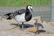 im Vogelpark Lampertheim