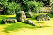 Teich im Briebelpark