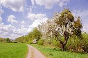 Frühling am Kühkopf