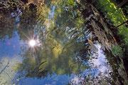 Spiegelung(Teich im Kurpark Löwensprudel)