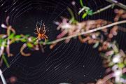 Mal eine Spinne, die gar nicht so ekelig aussieht!