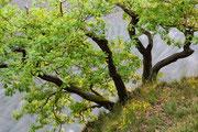 Hammerfels bei Herchen