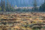 Großes Torfhaus Moor
