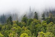 Waldhang unter dem Rachel