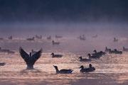 Morgen am Sieglarer See
