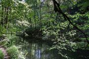 Frühling im Wesenitztal Mai 2011