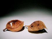 """""""Feuilles séches"""" ronce de bruyère - long 14 cm - 2001"""