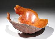 """"""" Carapace"""" ronce de bruyère - h 15 cm - 2008"""