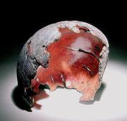 """Carapace"" ronce de manzanita - h 22 cm - 2006"