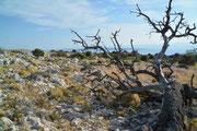 Kamenjak, Insel Rab