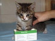 Die kleine LILI sagt ganz lieben Dank an ihre lieben ♥ Impfpaten Tierarztfamilie Schmidt in Cammer ♥