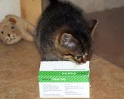 Die kleine SHIVA sagt ganz lieben Dank an ihre liebe ♥ Impfpatin Gaby/cindy ♥
