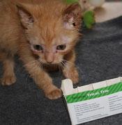 """Der kleine SZCZYPIOREK sagt ganz lieben Dank an seine lieben ♥ Impfpaten aus der Auktion im Forum """"Verlassene Pfoten"""" ♥"""