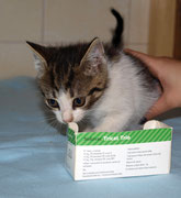 Die kleine LAYLA sagt ganz lieben Dank an ihre lieben ♥ Impfpaten Tierarztfamilie Schmidt in Cammer ♥