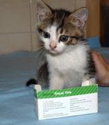 Der kleine FRED sagt ganz lieben Dank an seine liebe ♥ Impfpatin Heidi Karl-Kotzbauer ♥